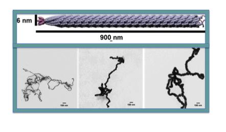 File:Au nanowires.png