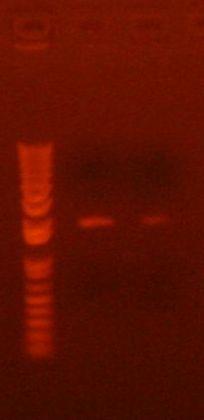 PCR 9-14-10.jpg