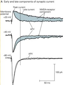 File:IGluR phases.png