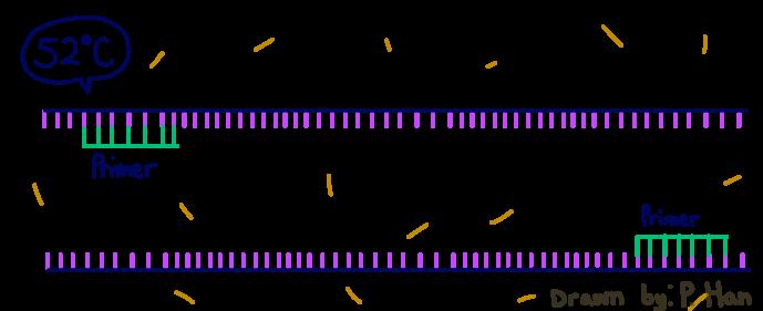 PCRRG122.png