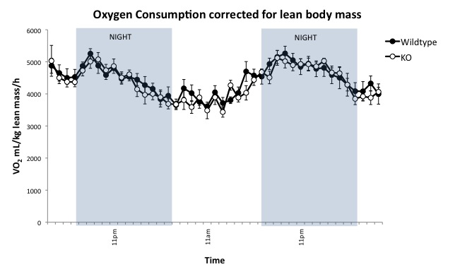 Image:Oxygen consumption graph male chow.jpg