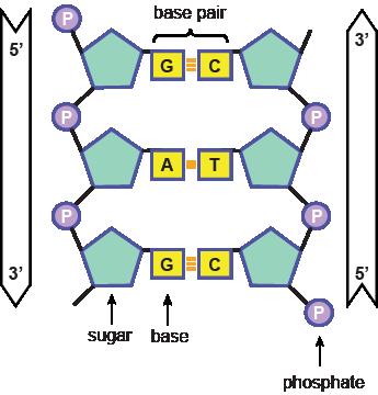 Group81030nucleotides.png