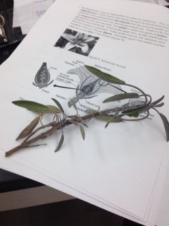 Lab 4, plant 1.jpg