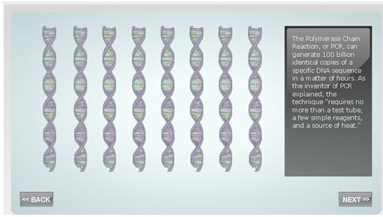 File:PCR1.png
