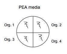 PEA.jpg