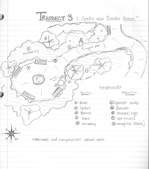 Transect3AerialDrawing.png