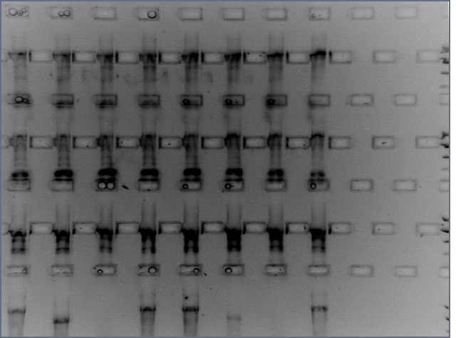 File:11-14 96pcr zoom.jpg