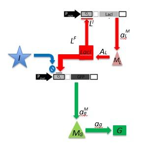 File:Ceroni Diagram.jpg