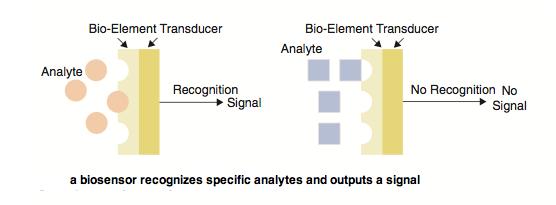Biosensor Enzyme