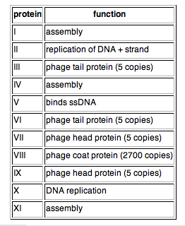 table of M13 protein functions