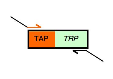 File:TAP-landing fwd.png