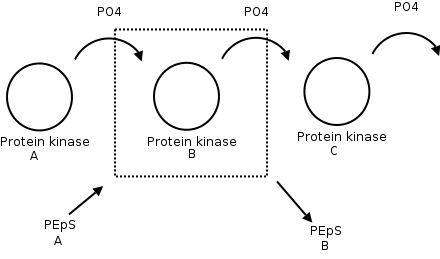 File:180-Kinase.png