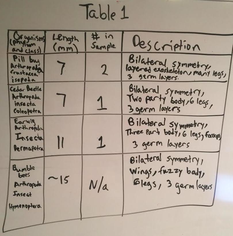 Invertabrate table.jpg