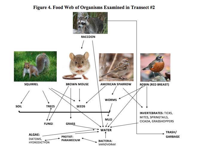 Userstudent 60notebookbiology 210 at au openwetware vertebrate food webg sciox Choice Image