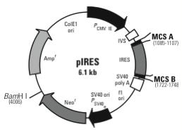 File:PIRES.png