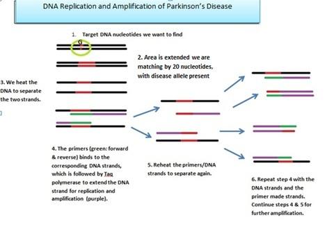 ParkinsonDNAPCR.jpg