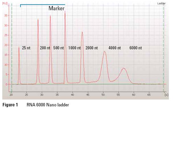 File:RNA nano ladder.png