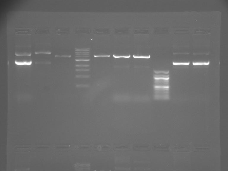 File:S12 M2D5 WF gel-Green.jpg