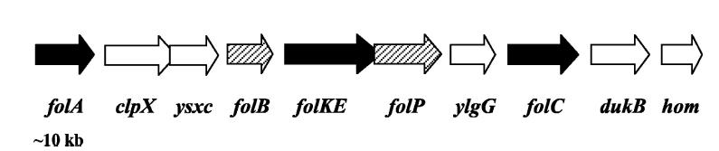 File:Folate gene cluster.jpg
