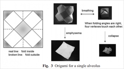 An origami model for an alveolus[F]