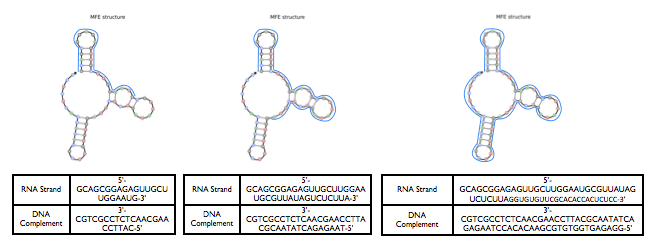 File:DNA complements 2.png