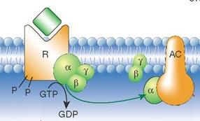 File:GPCR firestein 2001.jpg