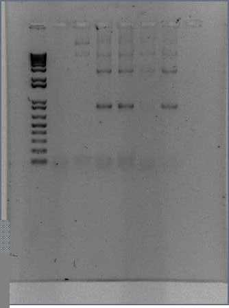 File:2009-06-30.Longtine0.35-186.jpg