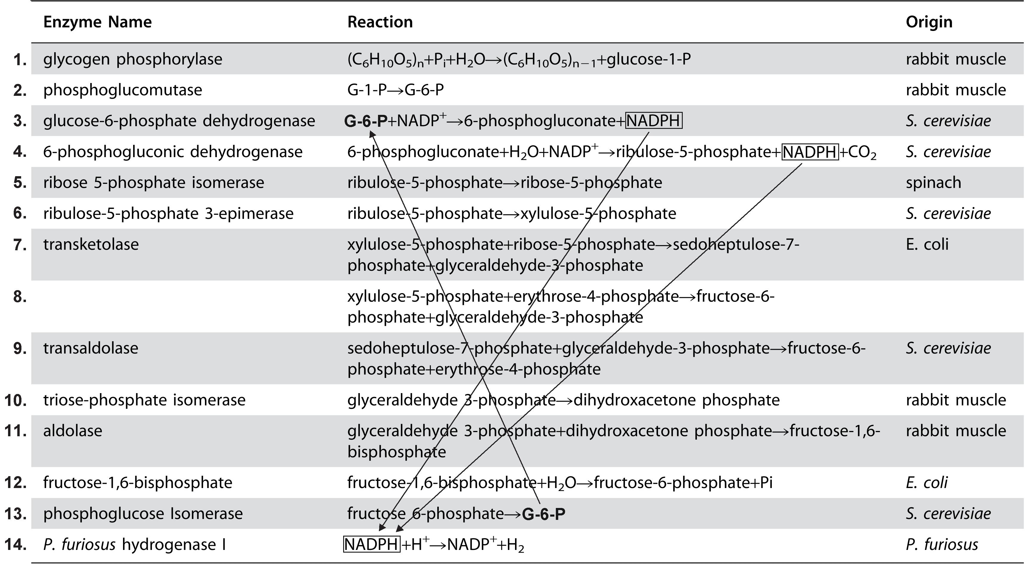 Enzymes2.jpg