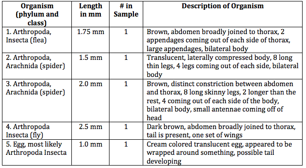 File:Transect invertebrates table.png