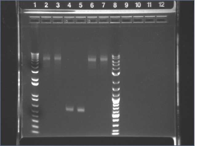 03-10 PCR pur-2 PT.jpg