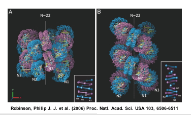File:Macintosh HD-Users-nkuldell-Desktop-30nmchromatinfiber PNAS06.png