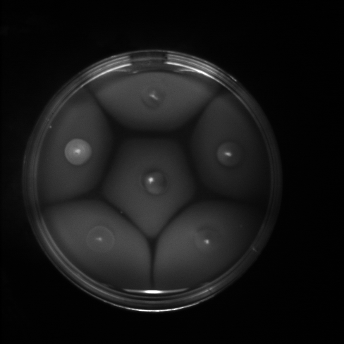 File:Plate02 blue.png