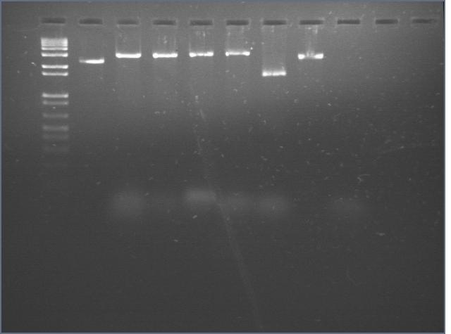 File:20060719 nanox6.jpg