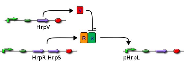 File:ICGEMS dvc HrpR&S+V+L.png