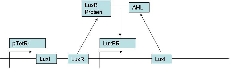 LuxPrLoop.JPG