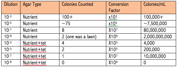 The above table shows the dilution of the hay infusion that was on each plate (either 10-2, 10-4, 10-6, or 10-8), the type of agar that was on each plate (either agar or agar and tetracycline), the number of bacterial colonies count on each plate, the conversion factor to determine the number of bacterial colonies per mL of the sample, and the number of bacterial colonies per mL of the sample.