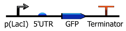 TinkerCell representation of parts in a lactose-inducible GFP part