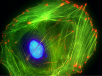 File:Colorful cell rgb.jpg
