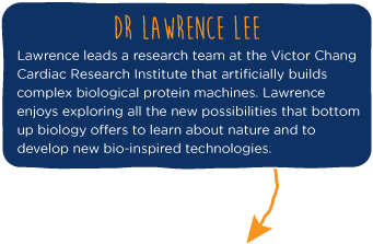 File:2014-EchiDNA-TEAM-LAWRENCE-BIO.png