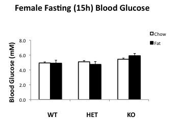 File:Female 15h fasting BG.jpg