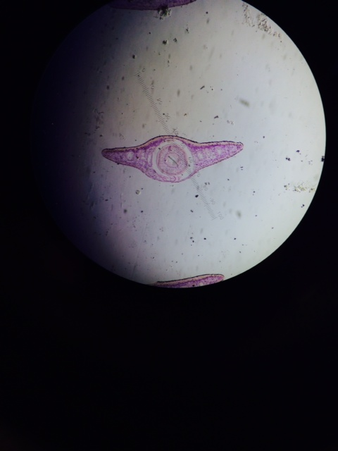 lab report on planarian Essays - largest database of quality sample essays and research papers on lab report on planarian.