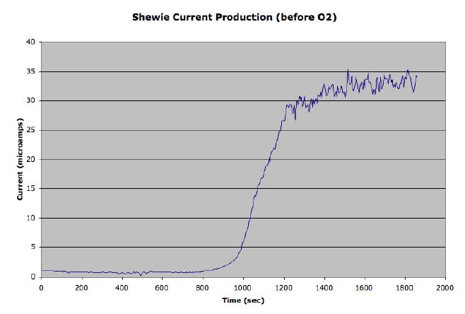File:ShewieCurrentProduction1.bmp