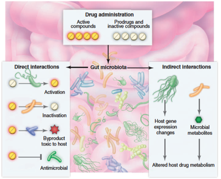 File:MicrobialDrugMetabolism.png