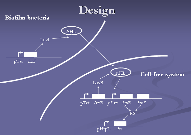 File:IC2007 biofilm design.png