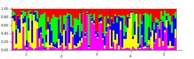 File:20111106 StructureBarPlot c5.jpg