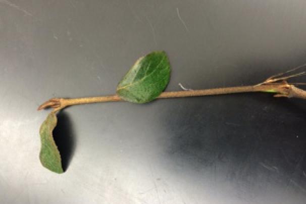 File:Branch&leaves.jpg