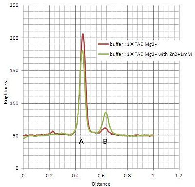 Figure 4. Plots of differences of luminosity between 0 min and 15min incubated samples under Mg2+ (red lines) or Mg2+ / Zn2+ (green lines) conditions