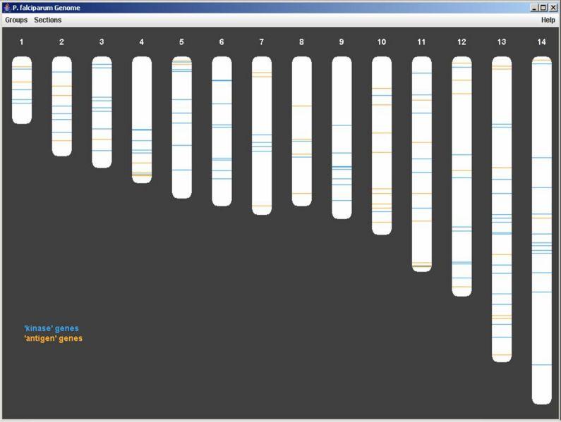 File:Magnet genome.jpg