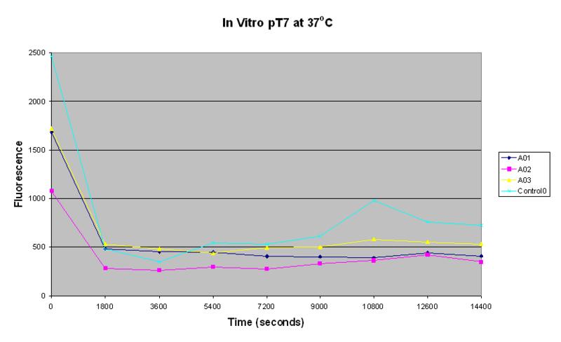 File:PT7-in-vitro-37oC.PNG