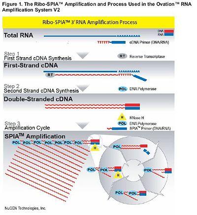 BioMicroCenter Nugen1.jpg